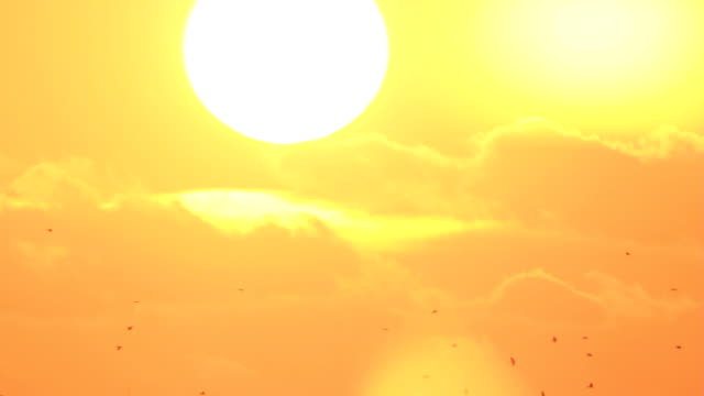 Birds fly at sun's background video