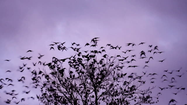 Birds flying away video