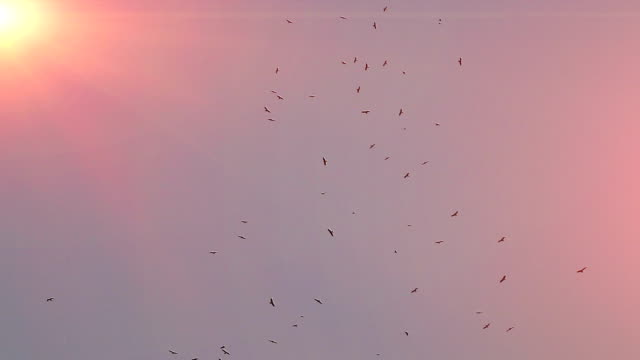 Birds flying in the sky video