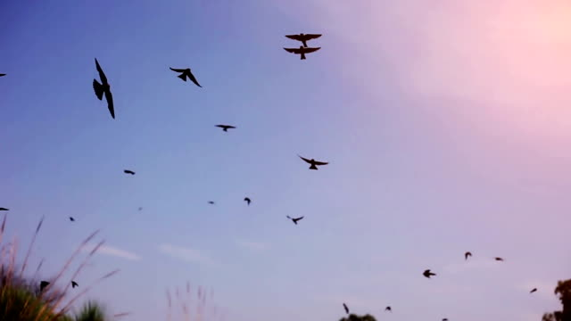Birds flying in the sky video