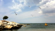 Birds flying over the sea video