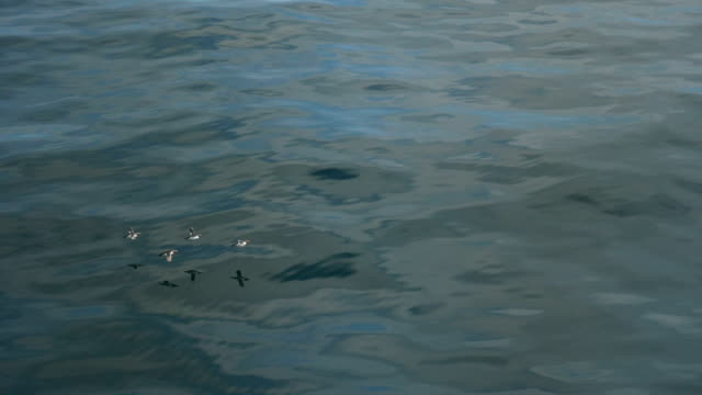 Birds Flying over Water Surface video