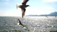 Birds flying video