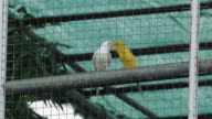 Birds in cage video