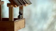 Birds in SLOW MOTION video