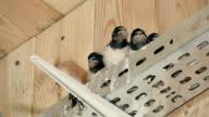 Birds in the nest video