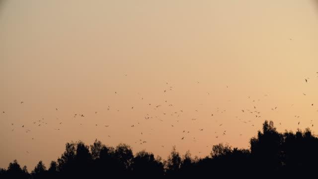 Birds in the Sky video