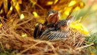Bird's Nest video