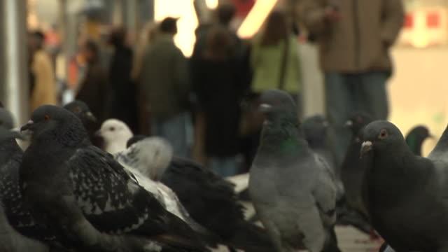 Birds of New York video