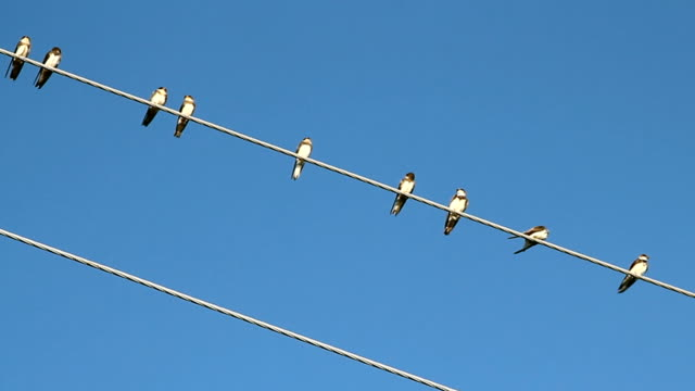 Birds on a electrical wire over blue sky video