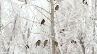 Birds on a tree over sky at winter day video