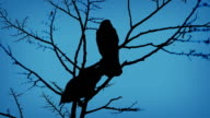 Birds On Branch And Flying Off In Evening video