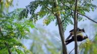 Birds On Branch video