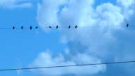 Birds on Telephone Wire Time Lapse video