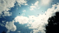 Birds on the sky video