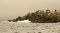 Birds Perched on Rock Island video