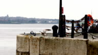 Birds Scared On Docks video