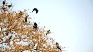 Birds Sitting on the Tree video