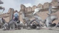 birds video
