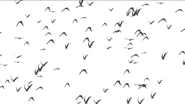birds white background video