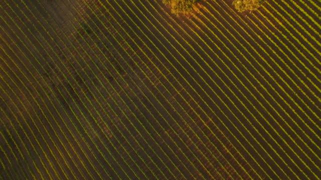 Birdseye View of Vineyard video