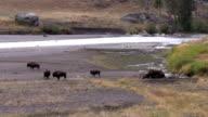 Bison Herd video