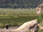 PAL: Bison video
