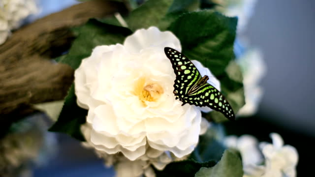 Black And Green Butterfly On Flower video