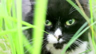 Black and white cat video
