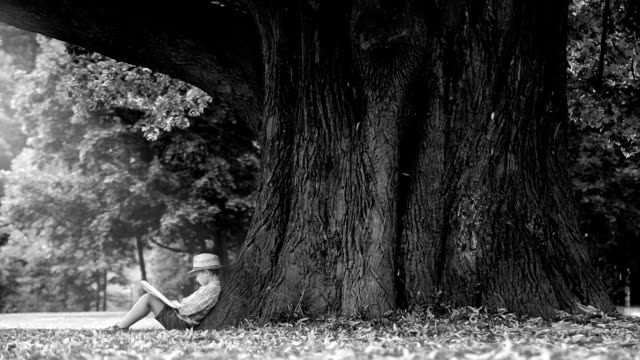 Black and white footage: a boy reading book under enormously big linded tree video