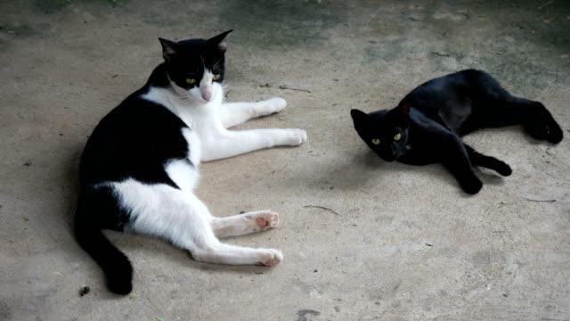 black and white kitten cat video