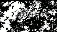 HD. Black and White Leaves. Nature. video