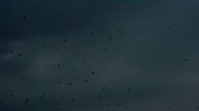 Black Birds Over Night Horizon video