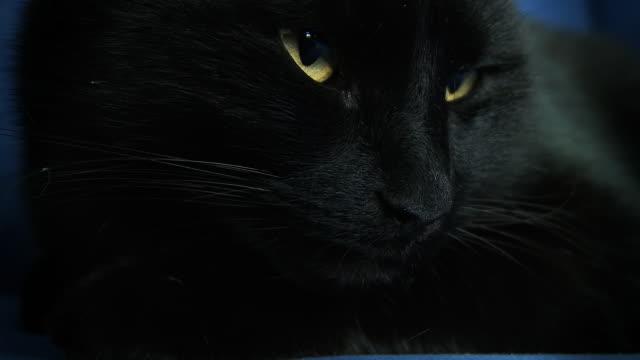 HD: Black Cat Awakening video