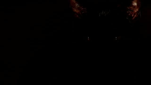 Black Cat portrait video