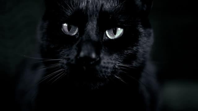 black cat video