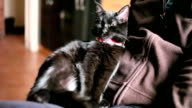 Black Cat with her owner video