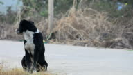Black dog is waiting on the road. video