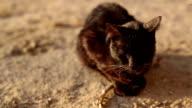 Black Homless Cat video