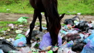 Black horse on dump waste video