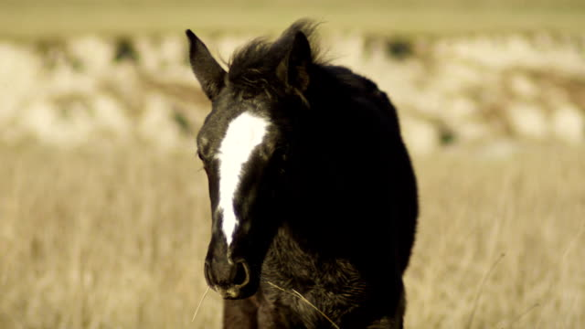 Black horse video