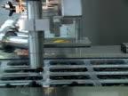 Black olive on conveyor line video