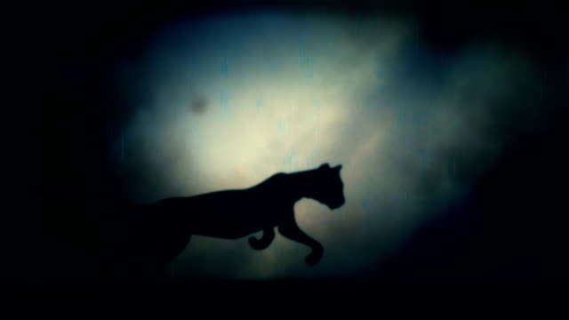 A Black Panther Runs in Loop Under a Rain and Lightning Storm at Night video