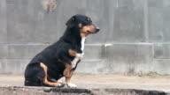 Black stray dog sitting on the sidewalk backyards video