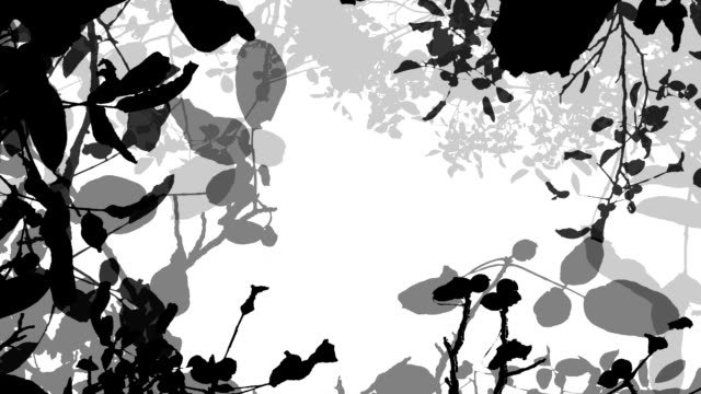 WALNUT TREE IN AUTUMN : black (seamless loopable) video