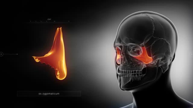 Black x-ray skull animation - Zygomatic bone - Os zygomaticum video