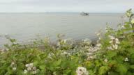Blackberry Bush Flowers, Fraser River video