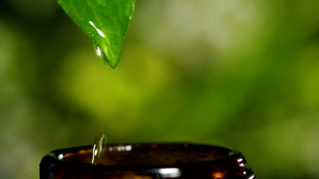 blend of essential oils with water drops, scents and aromas in aromatherapy for wellness and spa. concept of beauty. fragrant essential oil. essence drops fall from a leaf into pool in wellness center video