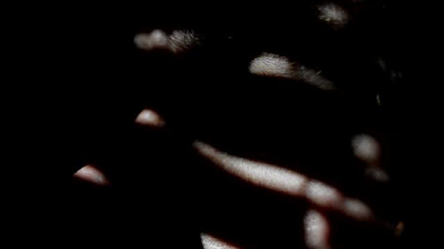Blinds - Man Peeking Through Window video