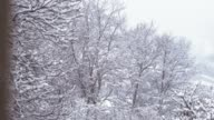 Blizzard top trees in forest slow motion video